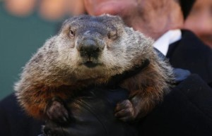 Famed weather prognosticating groundhog Punxsutawney Phil has only one eye open as he prepares to make his annual prediction on Gobbler's Knob in Punxsutawney